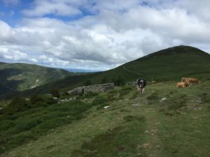 Trek to Berducedo, Post 42, Cow Pasture